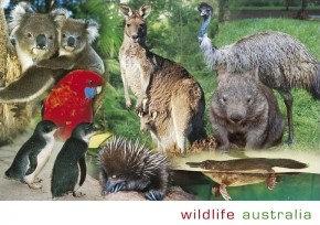 Wildlife Australia Montage