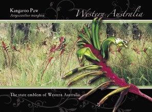 Kangaroo Paw Western Australia Postcard PC256