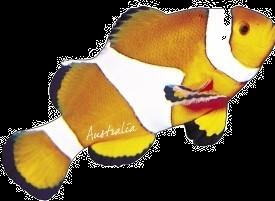 Clownfish Australia Shape Postcard PC190