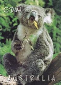 Koala G'day Australia PC174