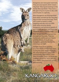 Kangaroo (Story) PC206