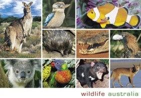Wildlife Australia (10 scene)
