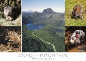 Cradle Mountain Tasmania Australia (Wildlife) Postcard PC271