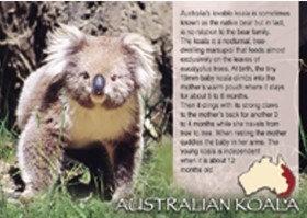 Australian Koala Story PC207