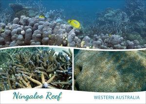 Ningaloo Reef Western Australia Postcard PC253