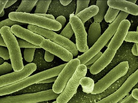 Topical antibiotics may slow wound healing