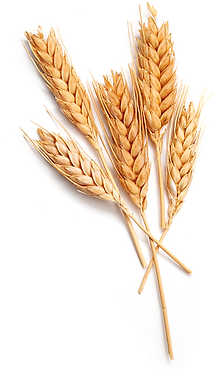 Wheat PNG.png
