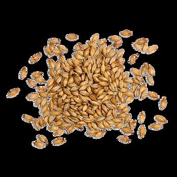 Grain PNG.png