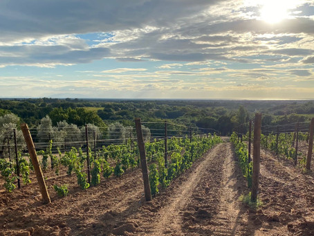 The Authentic Life + A New Natural Wine