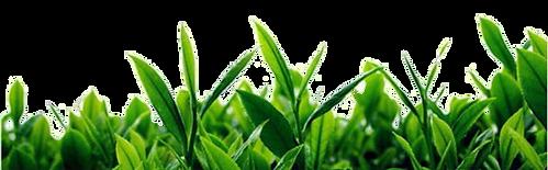 Herbal-israel מגוון מוצרי הרבלייף במחרים הכי זולים