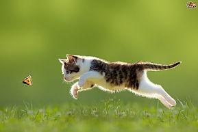 cat chasing butterfly.jpg