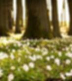 white flowers & trees.jpg
