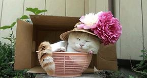 cat in basket.gif