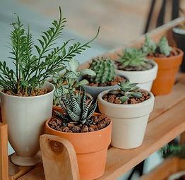 City Flora & Plants!