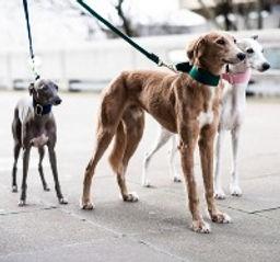 Dogsnug & Friends