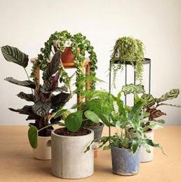 Canopy Plants