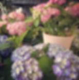 Flowerstalk