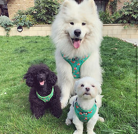 This lovely local business offers beautiful dog accessories for small to large paws as well as apparel items for their humans. Everything is designed in-house, inspired by you.