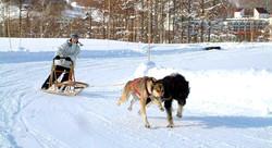 Snow Activity1