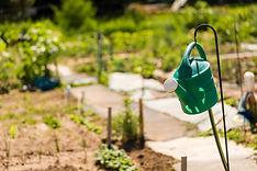 community garden.jpeg