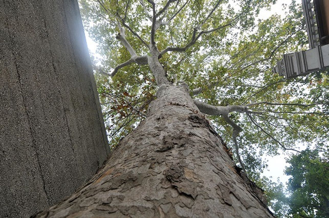 muro albero - Copia.JPG