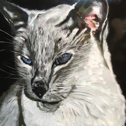 White & Grey Cat