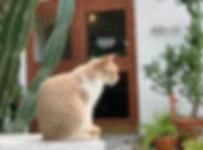 #沖縄 #散歩日和 #ブーゲンビリア #猫 #猫とアトリエ #okinawatr