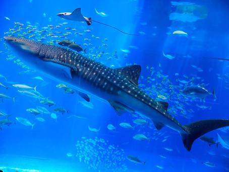 美ら海水族館の半券チケットがクーポンに!