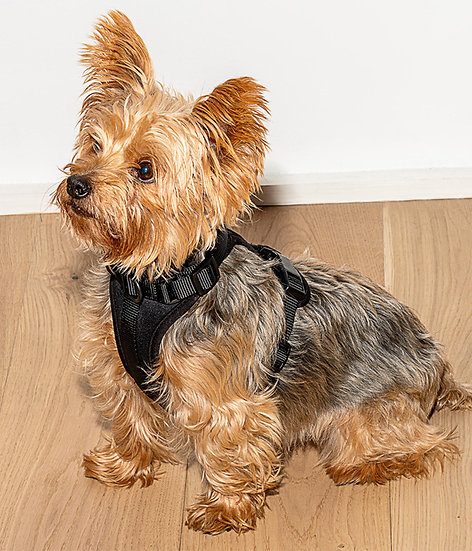 Wild One Dog Harness - Small