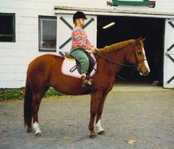 logansbrook ponies