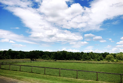 Turnout Pasture Fields.jpg
