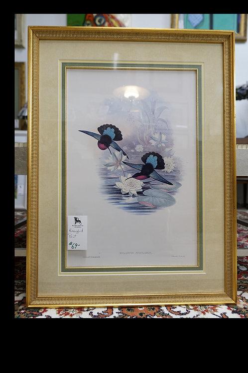 Hummingbird Print $69.00