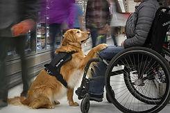 service dog help.jpg
