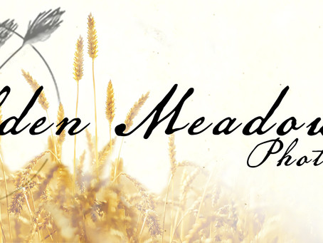 Welcome to Golden Meadows Photography