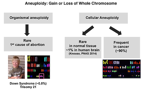 What is Aneuploidy.png