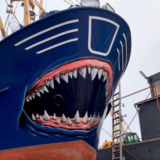 Shark on ship