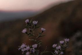 flowersss.JPG