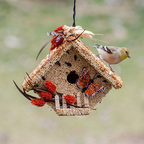 Bird Seed Houses & Treats by Mr Bird