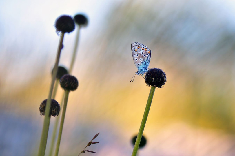 Papillon fond acidule et branchages by Veronique Xantopoulos