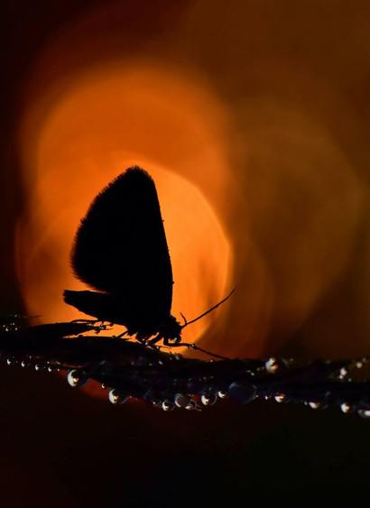 Papillon sur fond orange by Veronique Xatopoulos