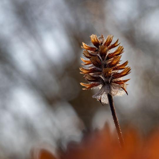 Winter blowinf off by Gerard Mathias