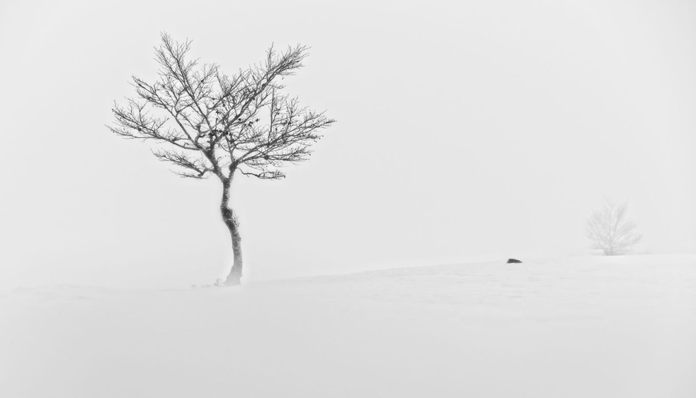 Brume hivernale by Sandra Broccolichi