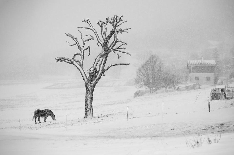 Au pied de mon arbre by Eugenio Abruzzese