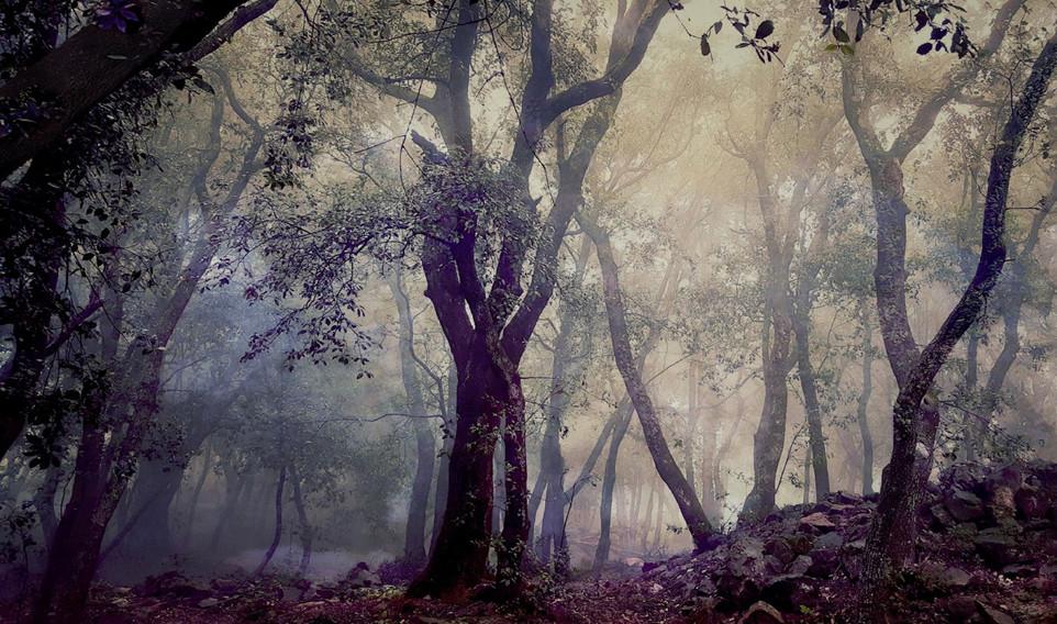 Arbres dans la brume by Veronique Xantopoulos