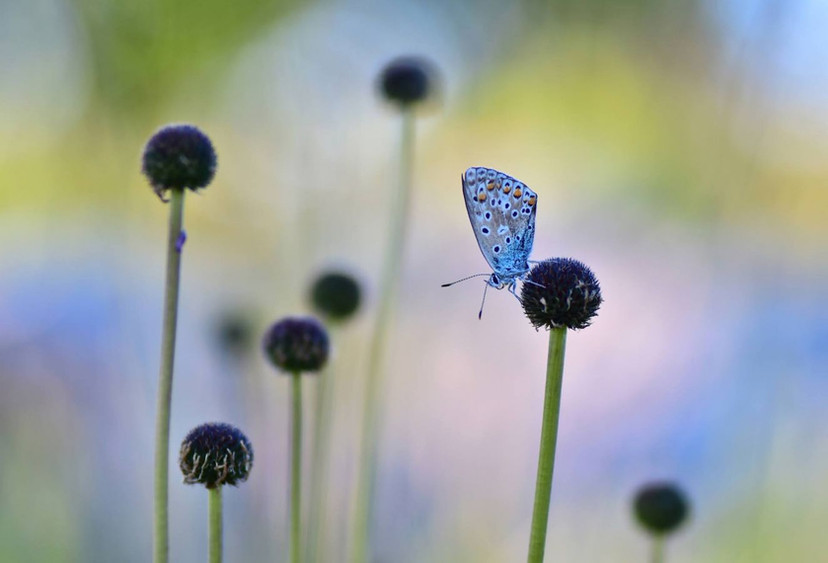 Papillon sur fond edulcore by Veronique Xantopoulos