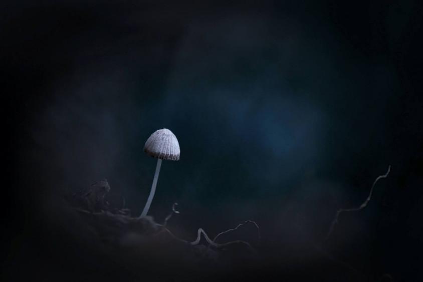 Champignon dans la pénombre bleue by Veronique Xantopoulos