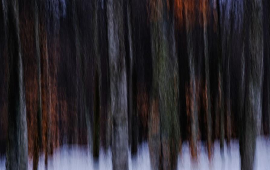 Spectre vegetal by Sandra Broccolichi
