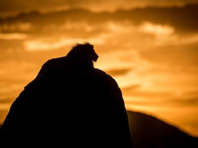Somos ovelhas ou leões que foram condicionados?