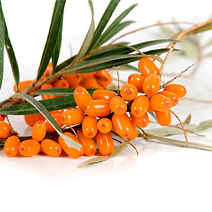Sea-Buckthorn-300x300