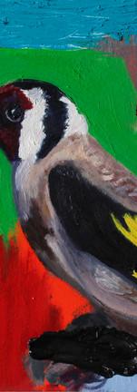 Oiseau Couleurs 2
